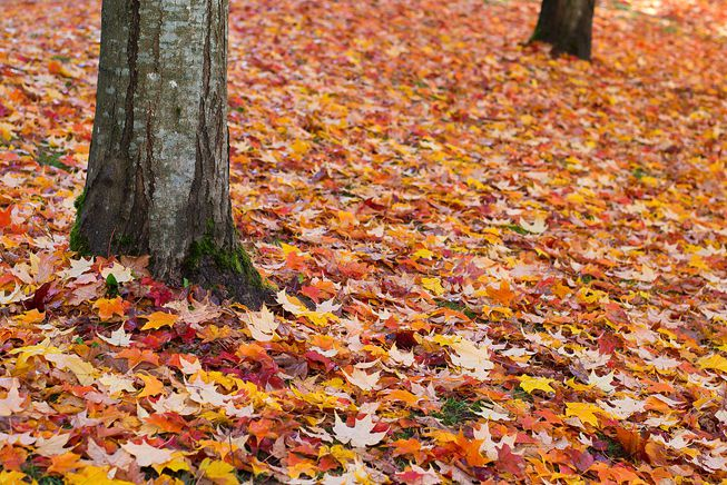 Multi-color leaves at the base of a tree during autumn