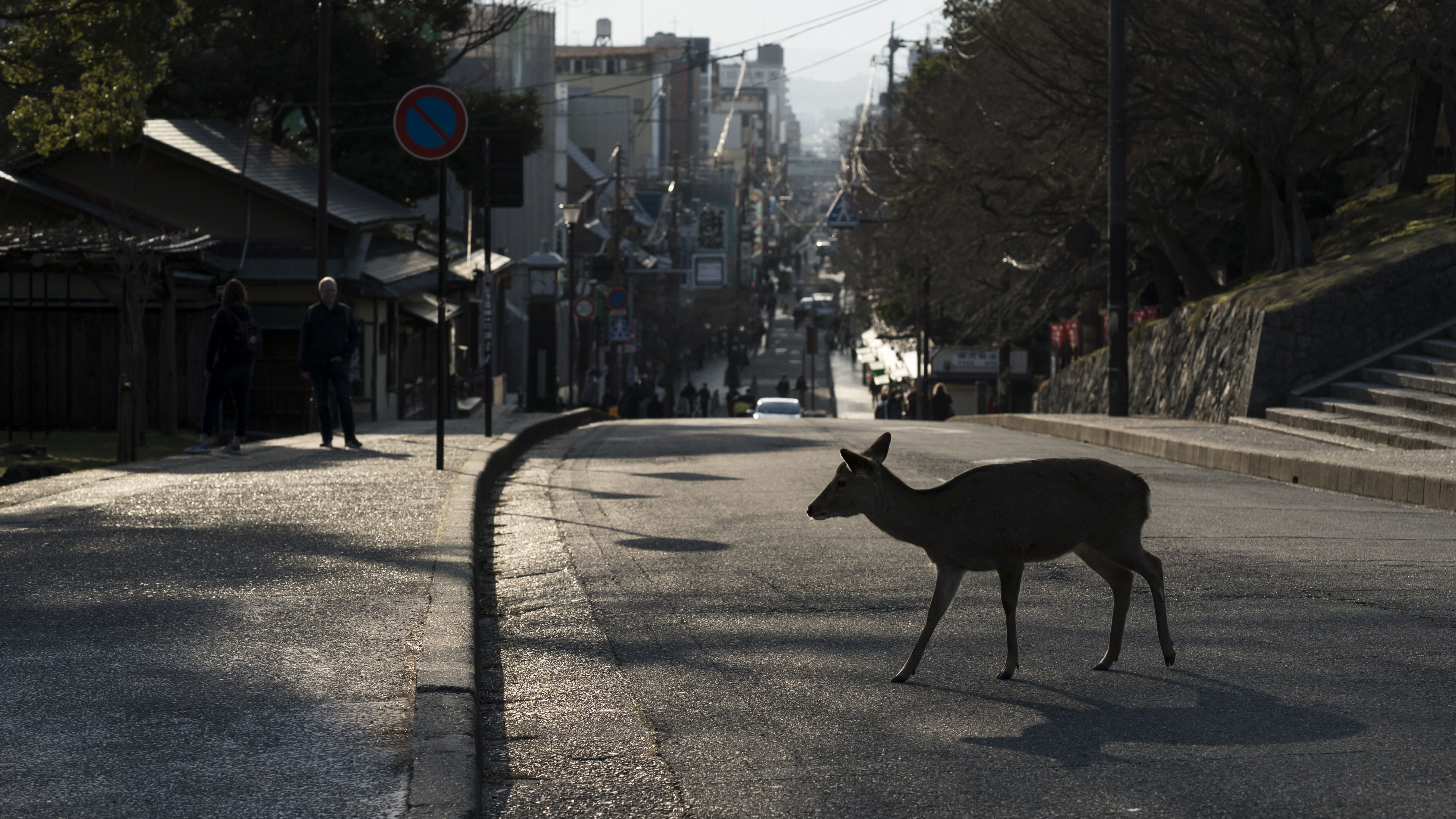 With Humans in Lockdown, Animals Flourish