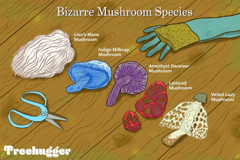 illustration with bizarre mushroom species, scissors, and gloves