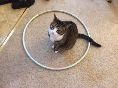 cat sits in a circle