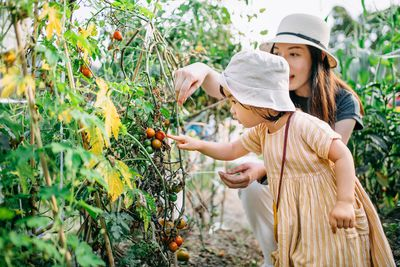 Happy young Asian family experiencing agriculture in an organic tomato farm