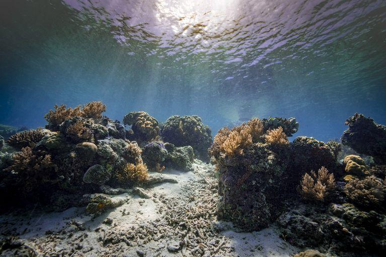 Corals underwater