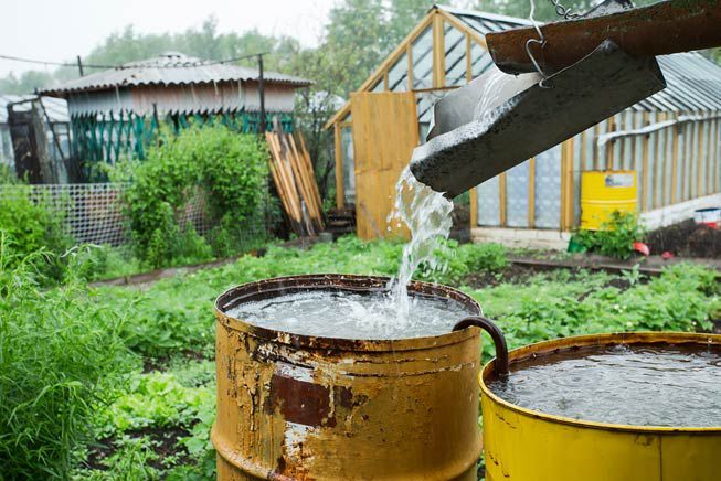 A rain barrel collects water in a garden
