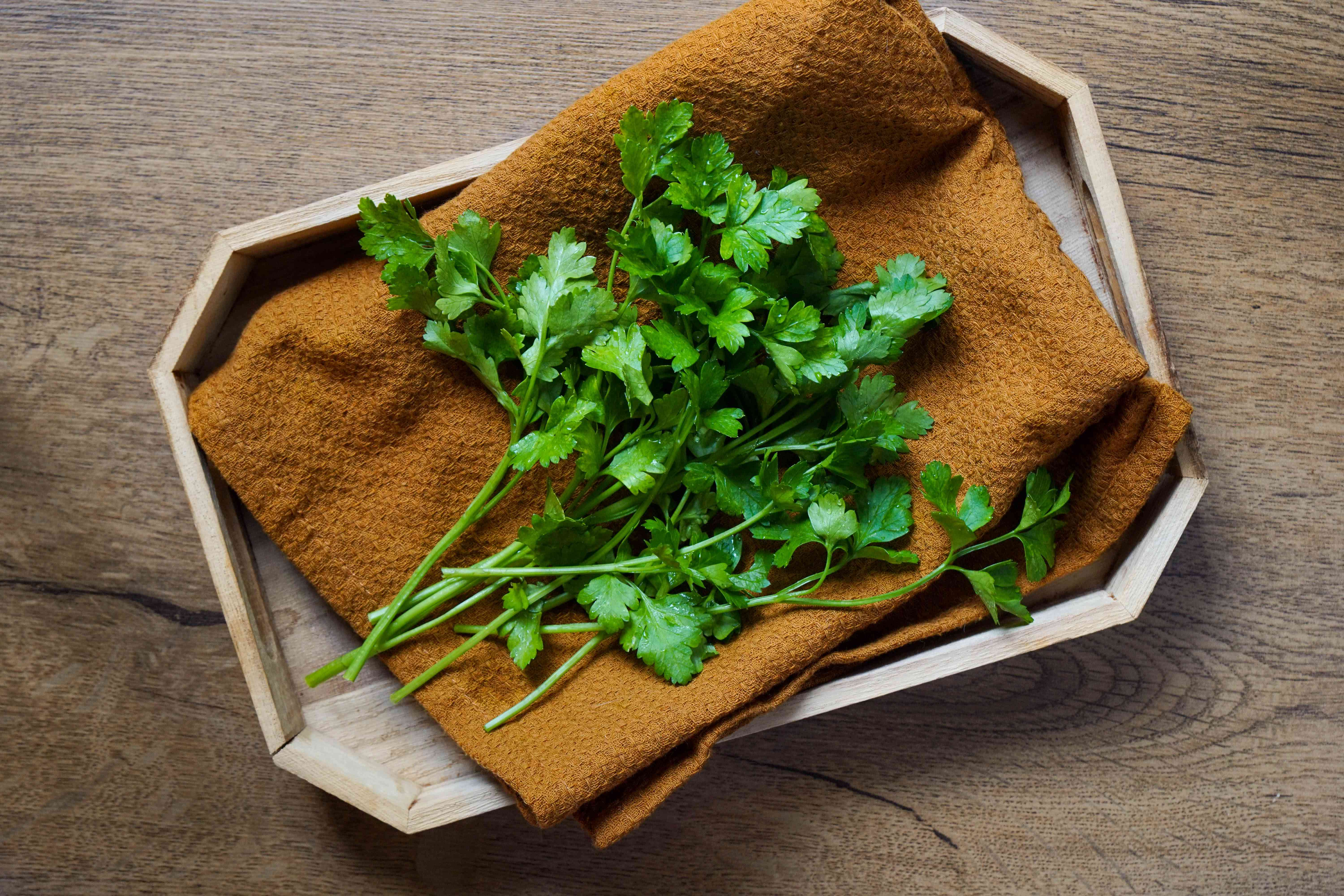 washed and dried parsley rests on brown napkin ready for water storage