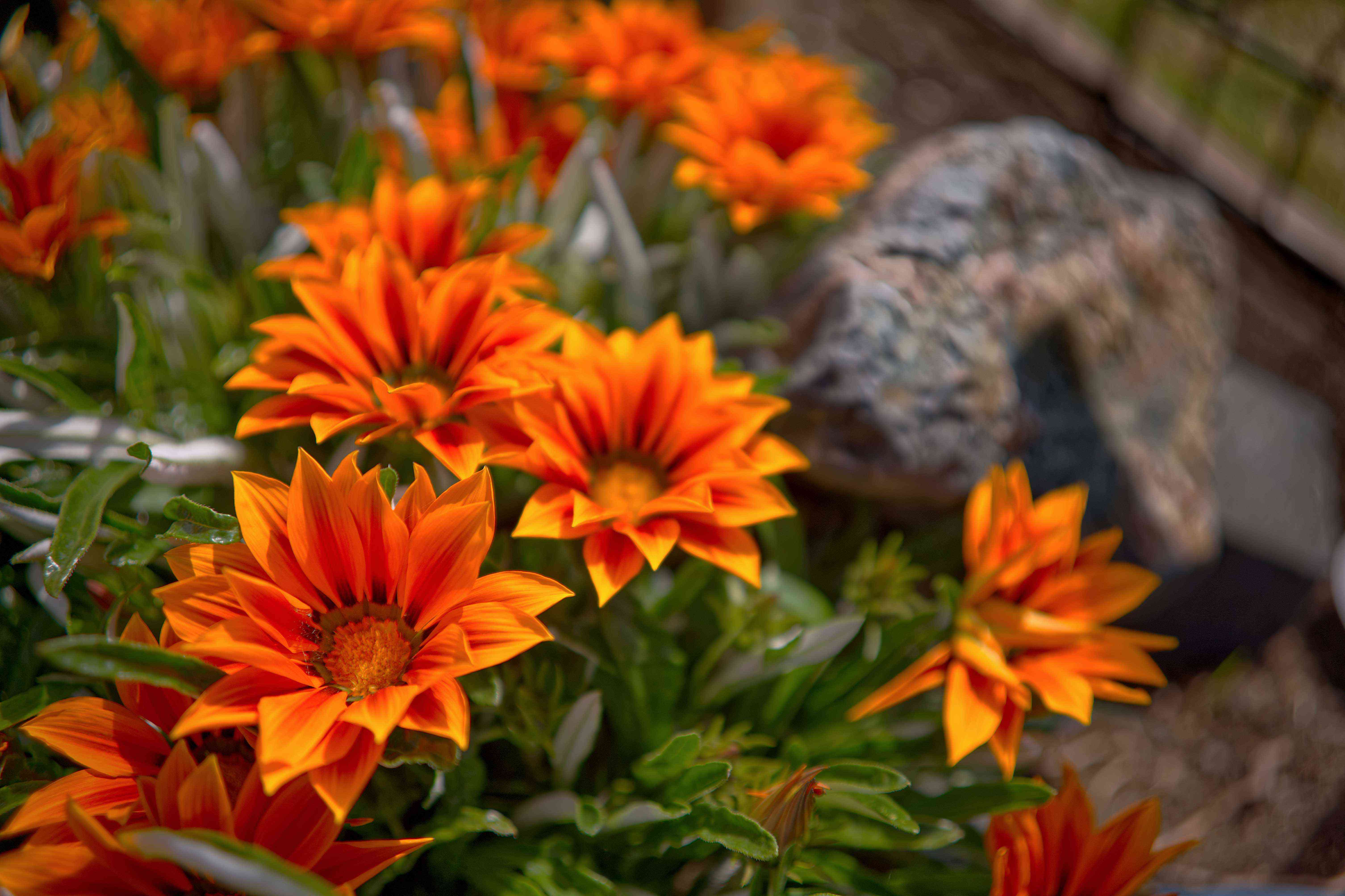 bright orange tropical flowers grow in small garden