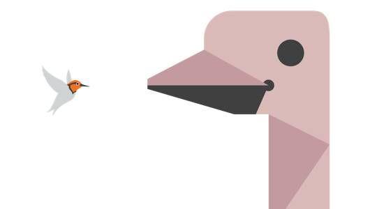 Infografía: Guía de ciencia pop de la madre naturaleza para las aves