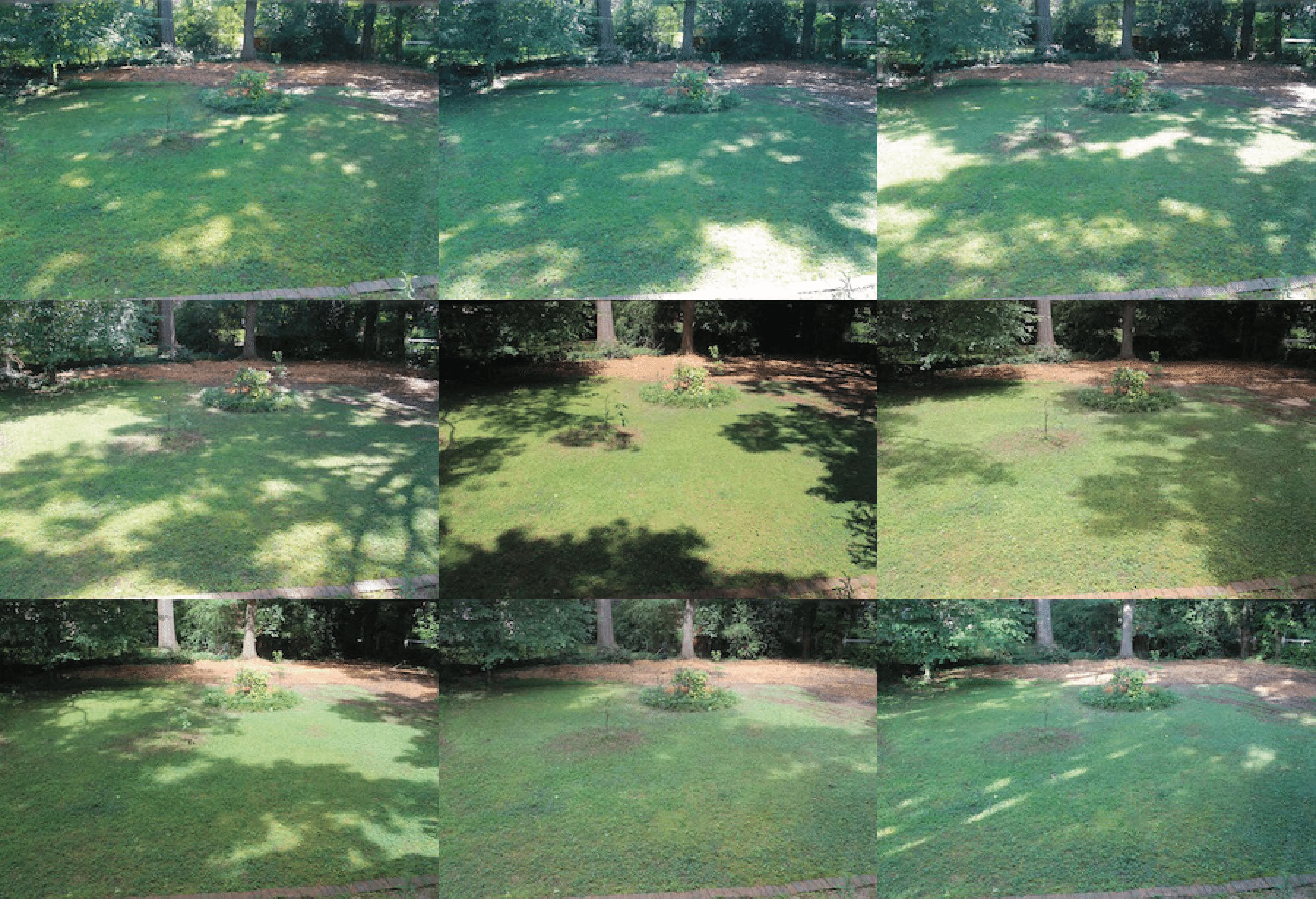 photos of garden sunlight exposure