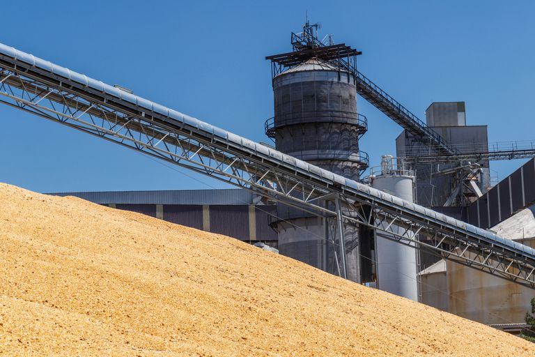 Corn grain at a plant that can be made into ethanol or feed.