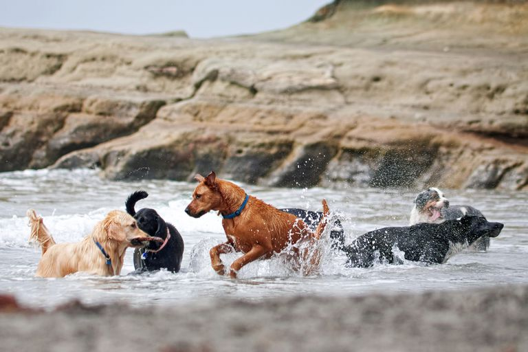 Group of dogs frolicking in water
