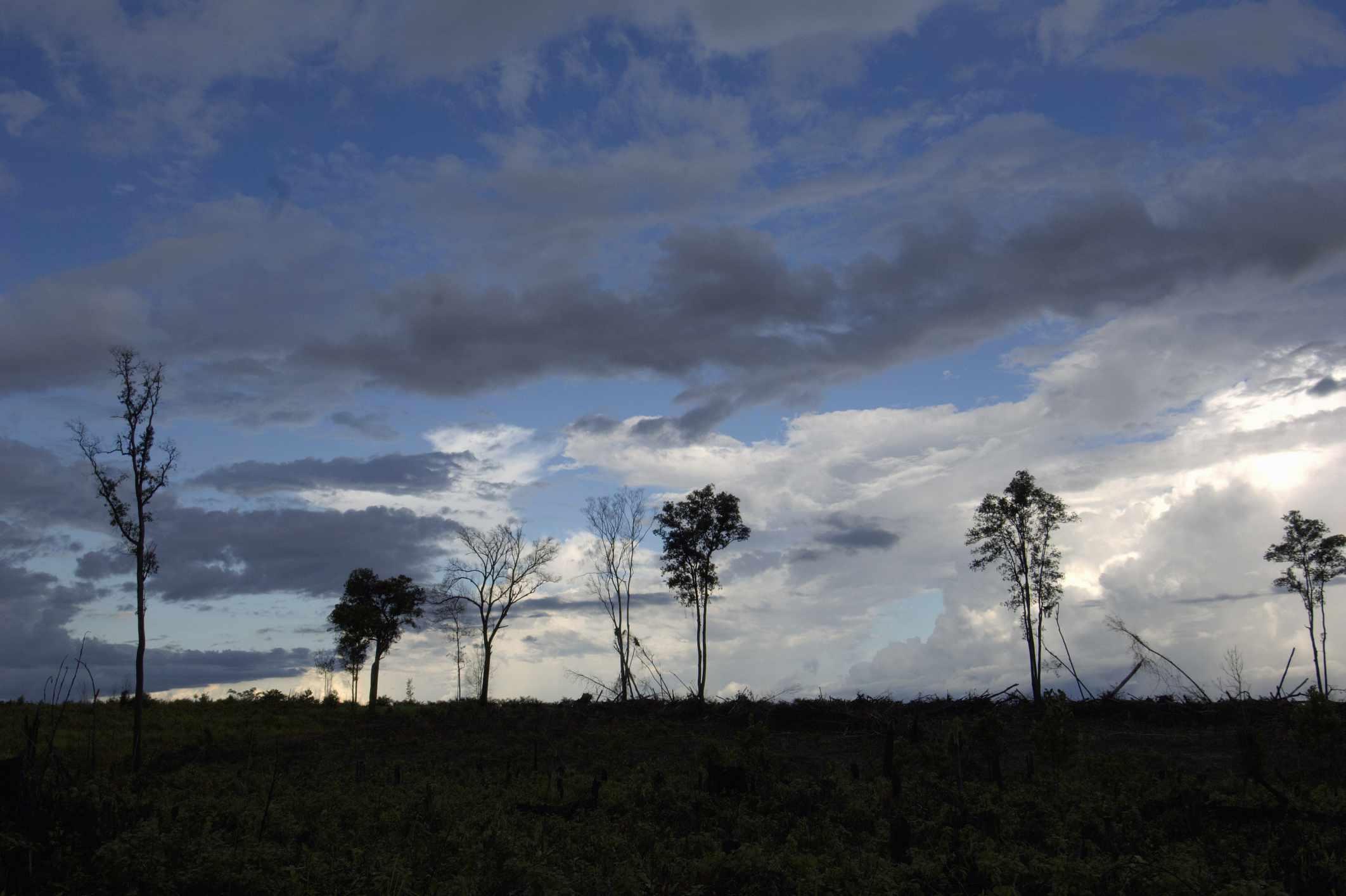 deforestationIndonesia_GavinPearsons_OxfordScientific_Getty.jpg