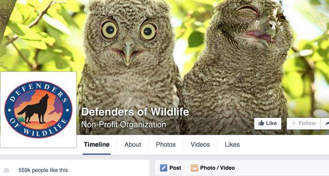 Defenders fo Wildlife on Facebook