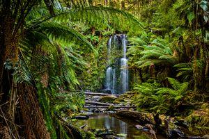 Beauchamp Falls, Great Otway National Park, Victoria