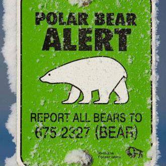 polar bear alert sign