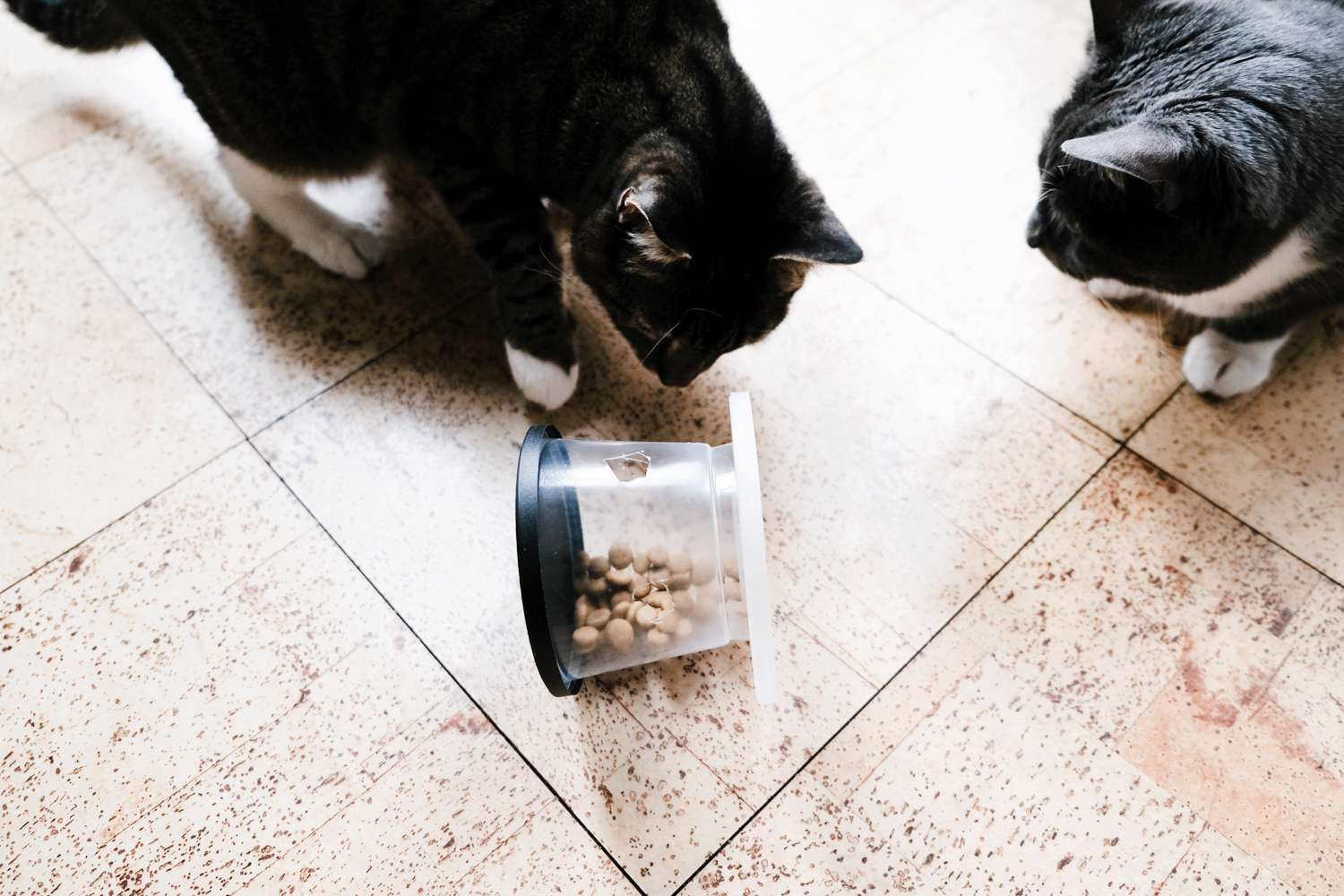 two kitties play with DIY wheel feeder made out of recycled plastic containers