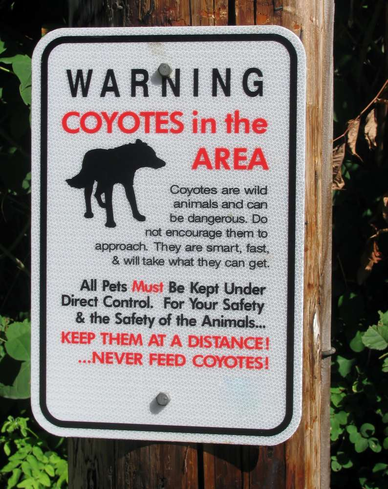 Pay attention to signs alerting hikers to predators in the area. Small dogs can look like tempting prey on the trail.