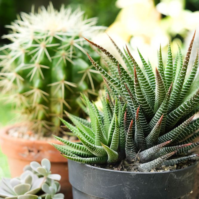 32 Inspirational Gardening Quotes