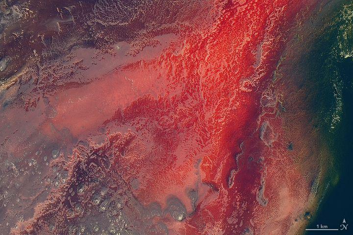 Lake Natron captured by NASA's Landsat 8