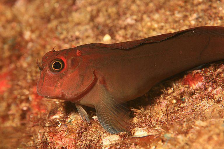 Peces encontrados dejando el mar para evolucionar a animales terrestres