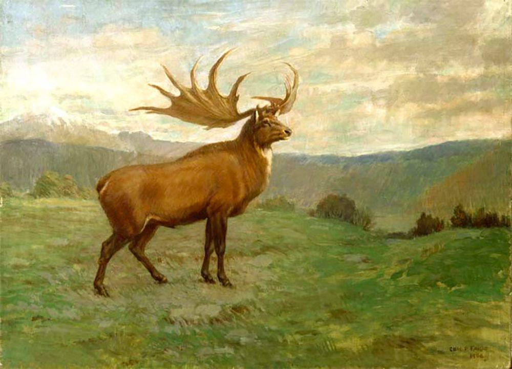 brown elk with very large rack of antlers