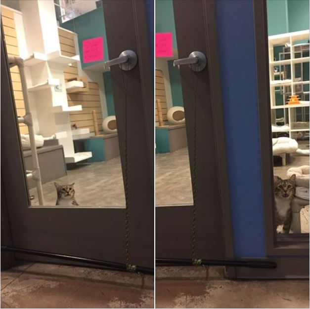 Quilty at the door of the cat room.
