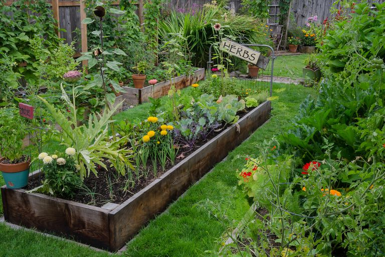 herb garden in raised bed