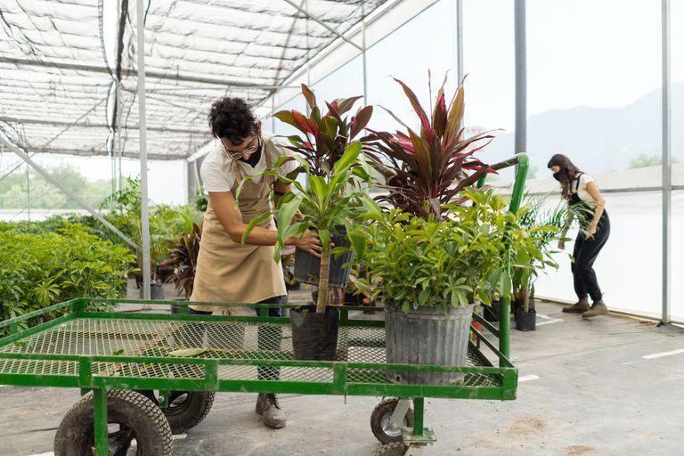 nursery cart with plants