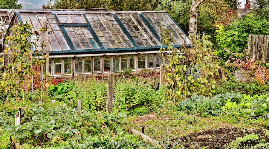 Your Garden Eats Carbon (So Please Feed It Well!)