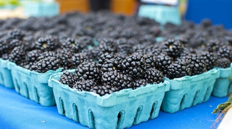 Blackberry baskets lined up on a blue table