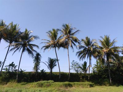 Low Angle View Of Palm Trees Against Blue Sk