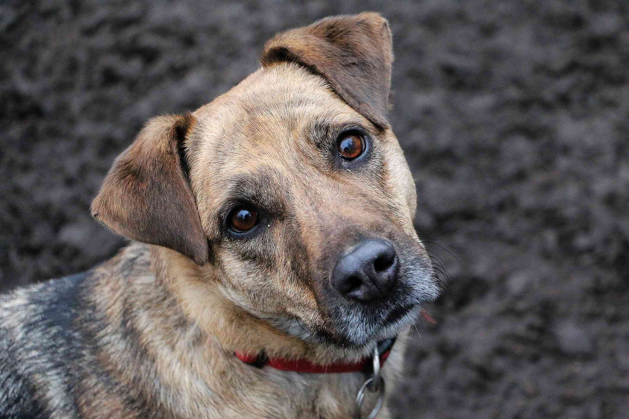A mutt tilts its head against a muddy background.