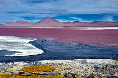 Vividly-colored Laguna Colorada in Potosi, Bolivia, is a haven for flamingos and tourists.