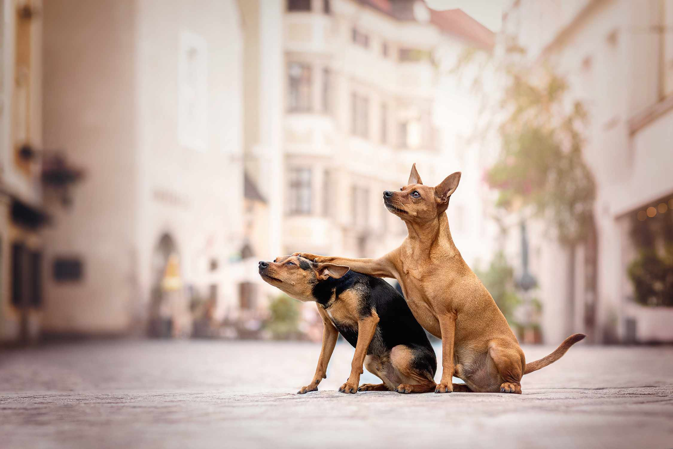 dog patting dog on head