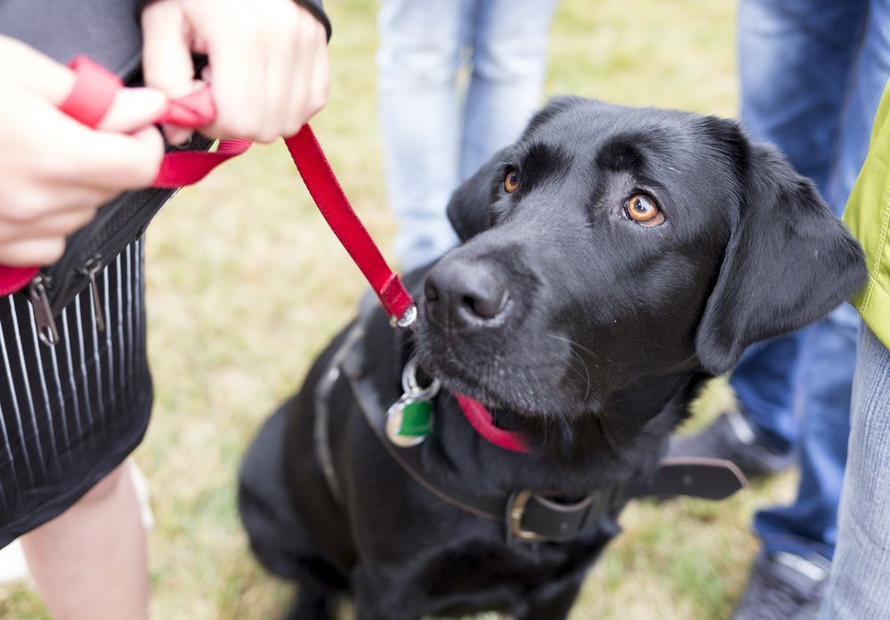 5 Games That Will Improve Your Next Dog Walk