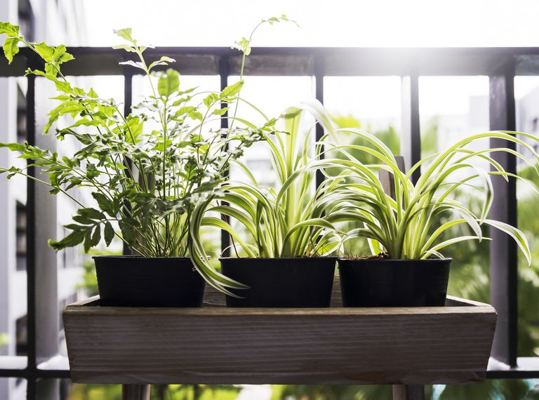 3 potted plants in a wooden tray on a balcony