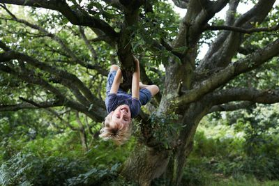 child hangs from a tree