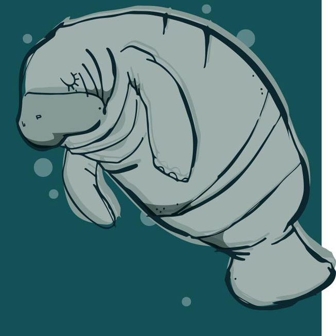 An illustration of a manatee