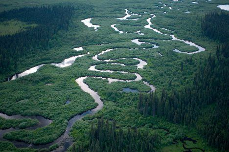 great bear rainforest photo