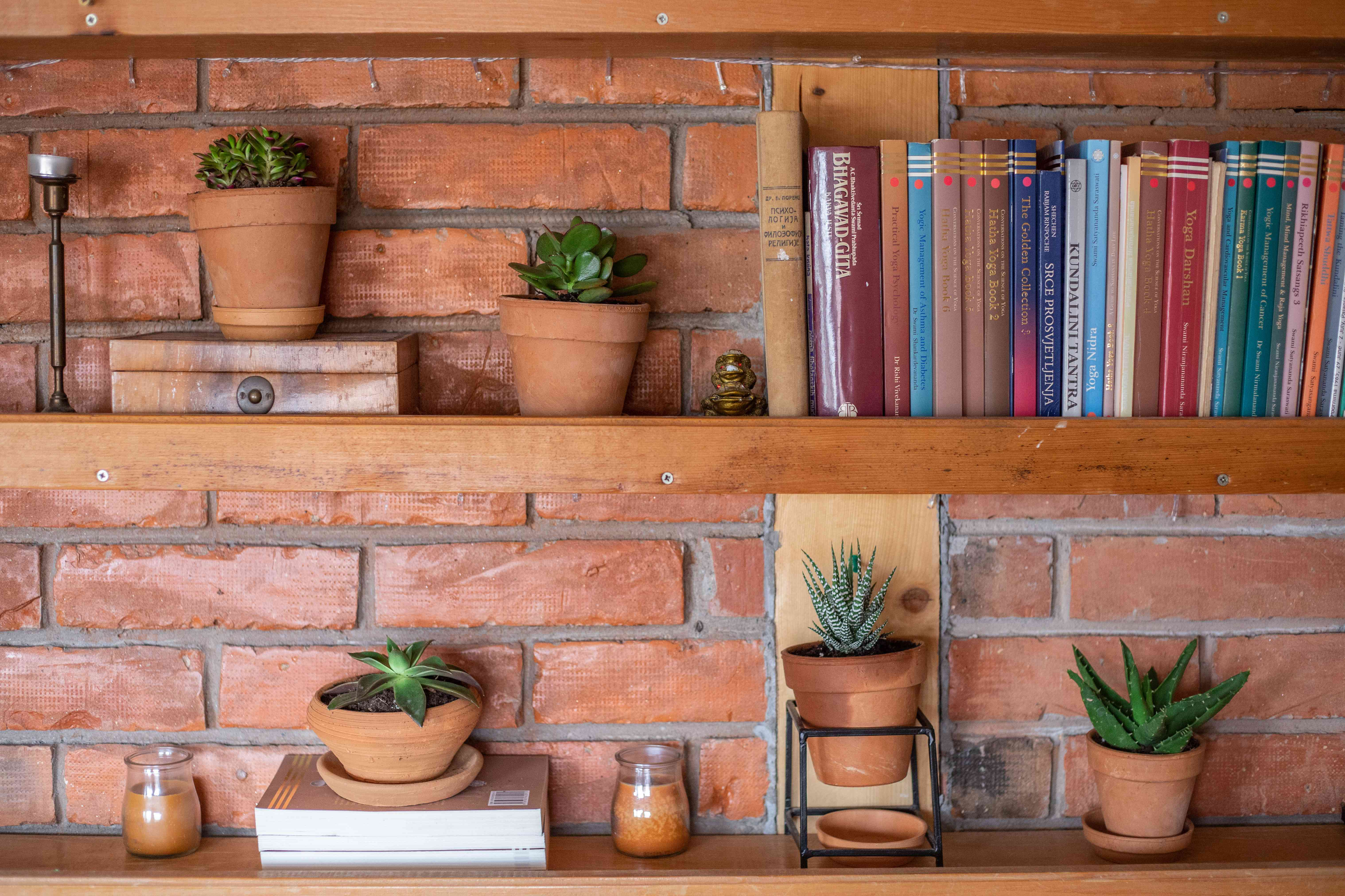 row of succulents against brick wall with row of books