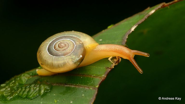 A snail on the edge of a leaf