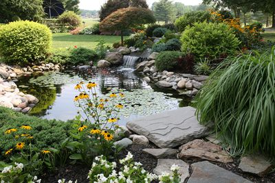A backyard pond surrounded with plants.