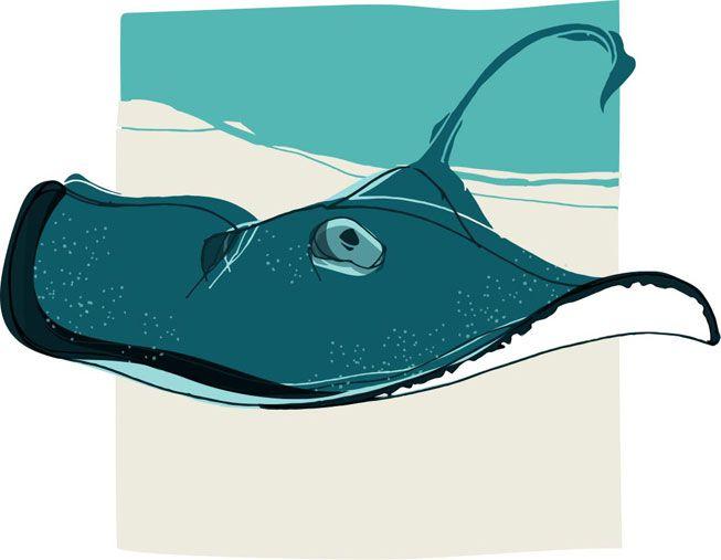 An illustration of a stingray