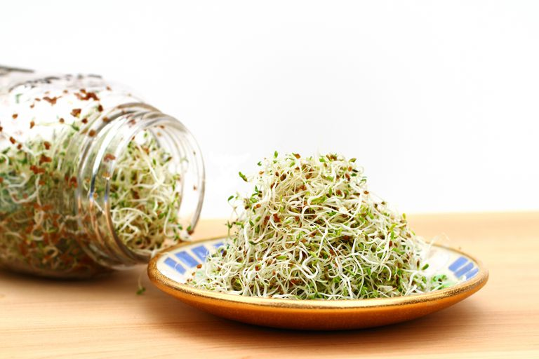 A heap of freshly grown organic alfalfa sprouts is piled on a small saucer