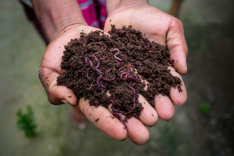 Close up of hands holding worms in dirt.