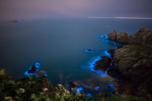 Blue Tears bioluminescent algae in Taiwan