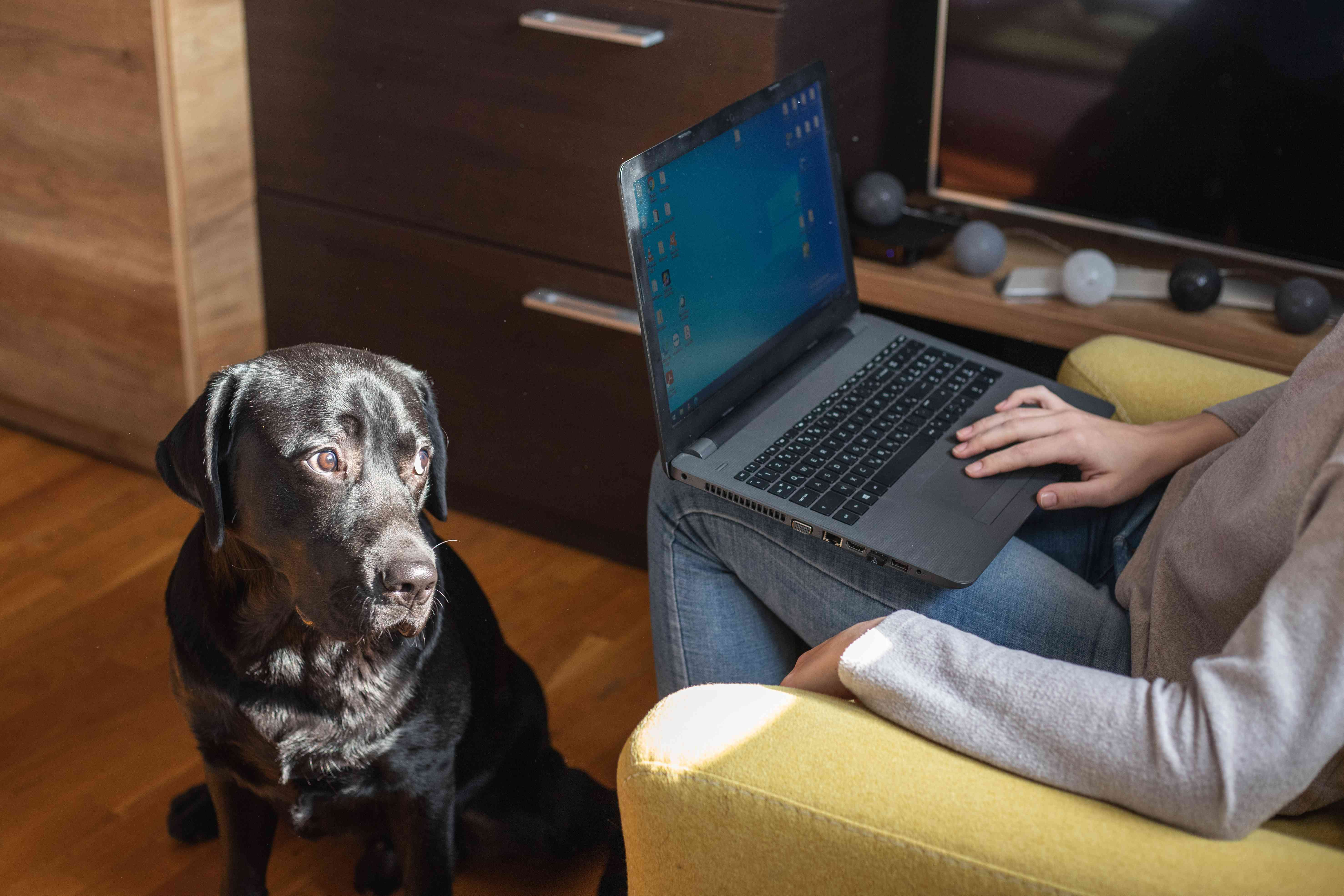 dog looks at owner bored while owner plays on laptop