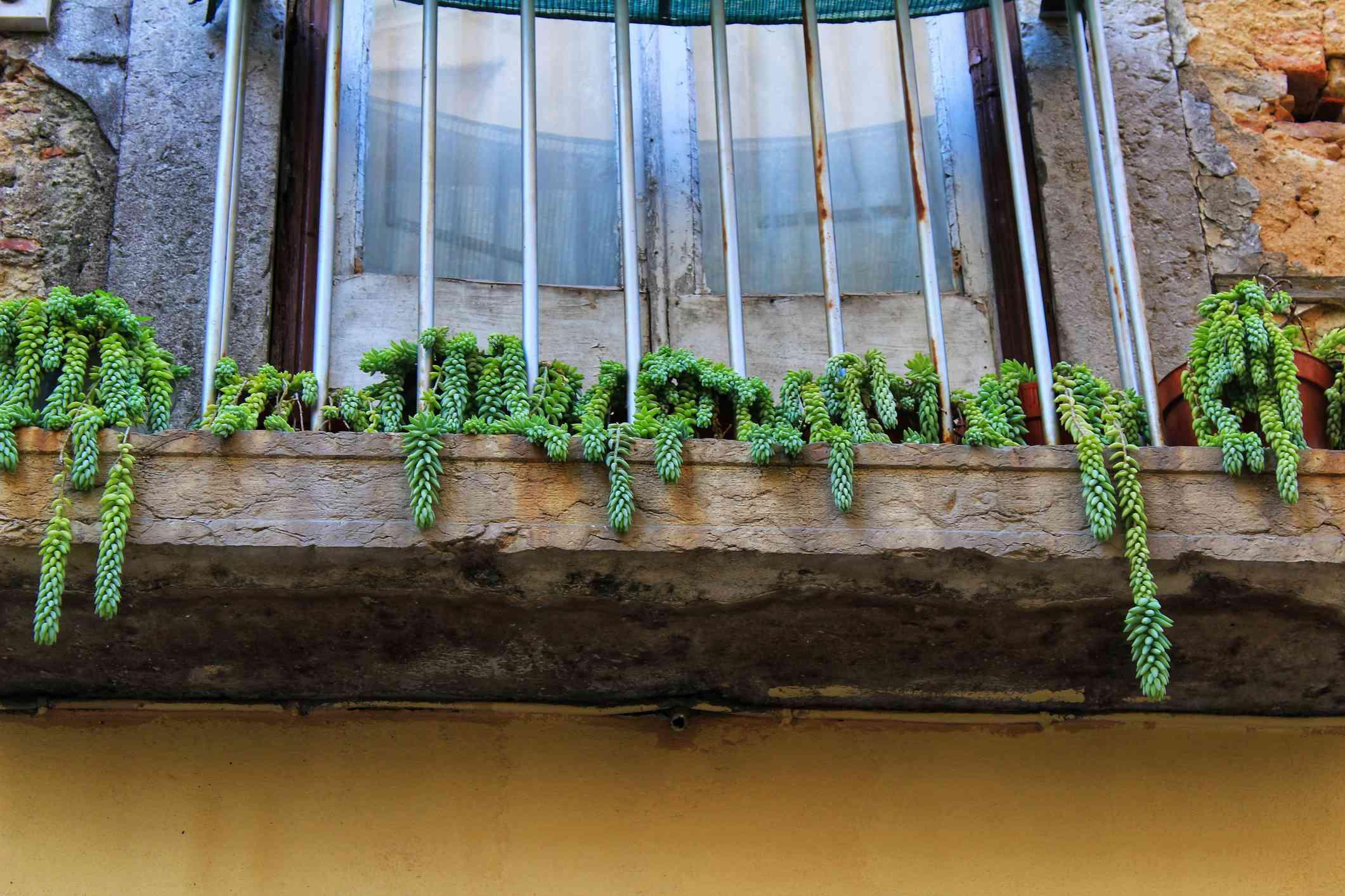Balcony with sedum flower pots