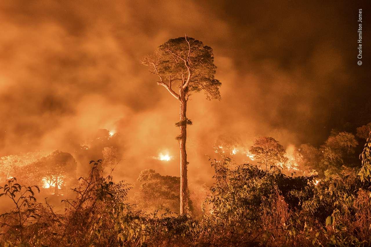 'Amazon Burning' by Charlie Hamilton James