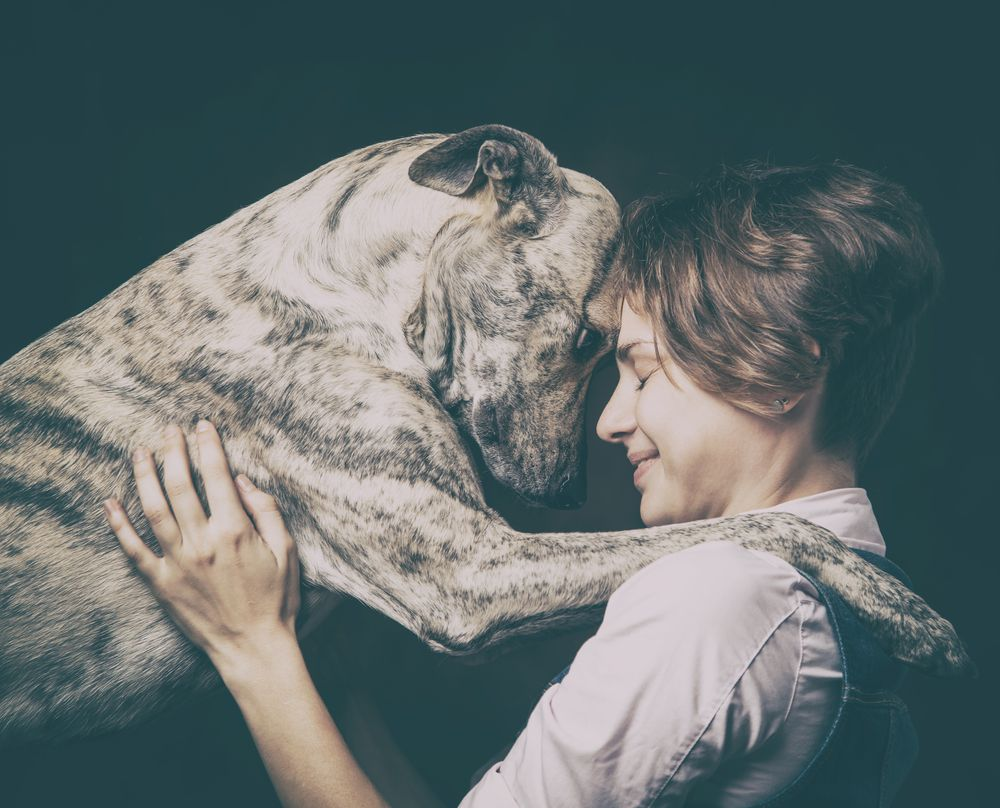 portrait of dog and woman communicating