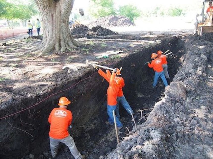 digging tree trench photo