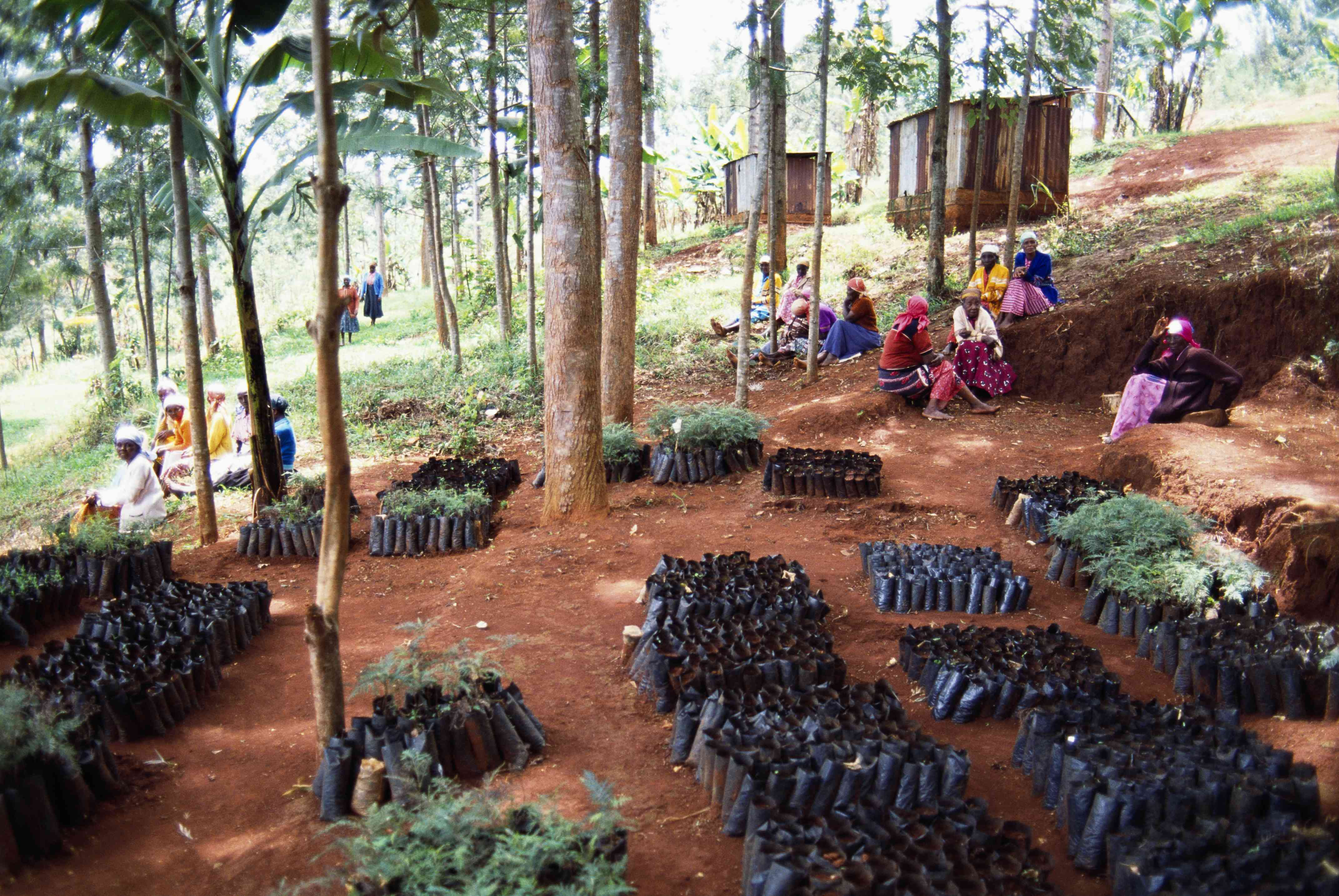 Green Belt Movement in Kenya